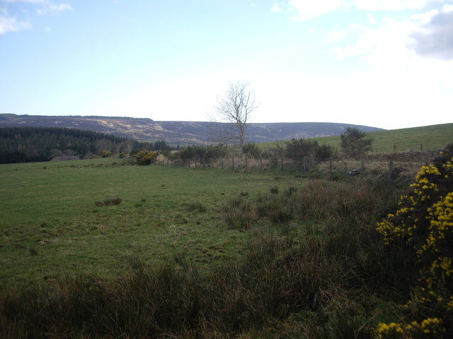Looking SSE from North Bandodle road junction