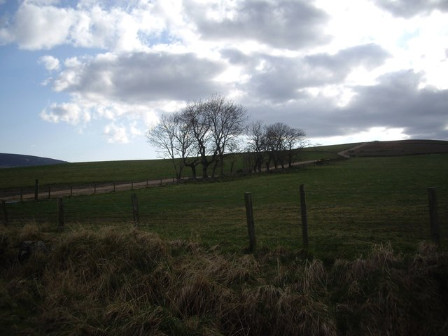 A short stretch of hedgerow trees