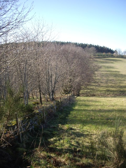 Western edge of Kennel Croft Wood