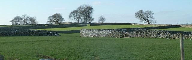 Upland pasture, limestone grassland