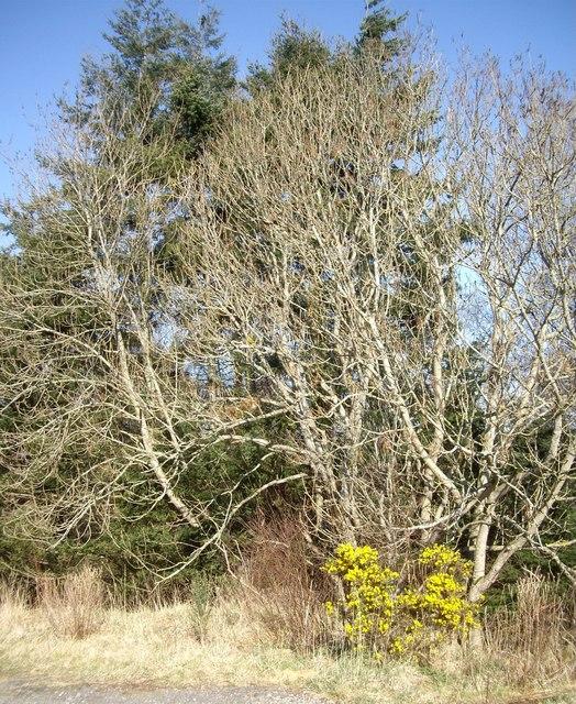 Spring near Tillybirloch