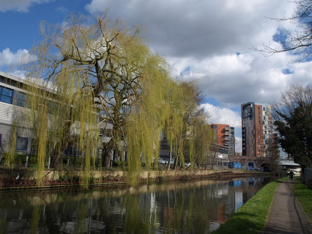 Willow by the canal, Alperton