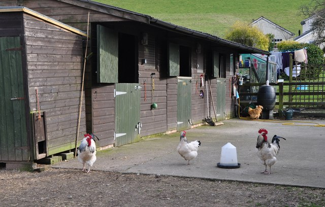 Mid Devon : Chickens at The Forge