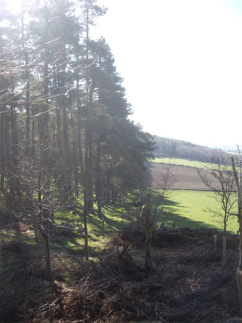 A woodland edge on the Learney Estate