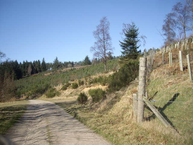 A bend in the drive to Learney House