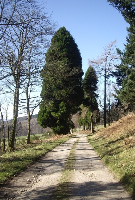 Driveway to Learney House