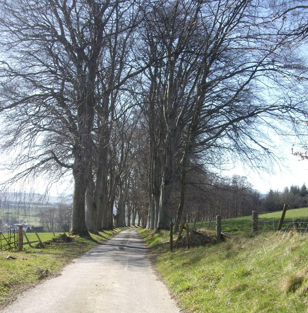 Tree-lined drive from Learney House