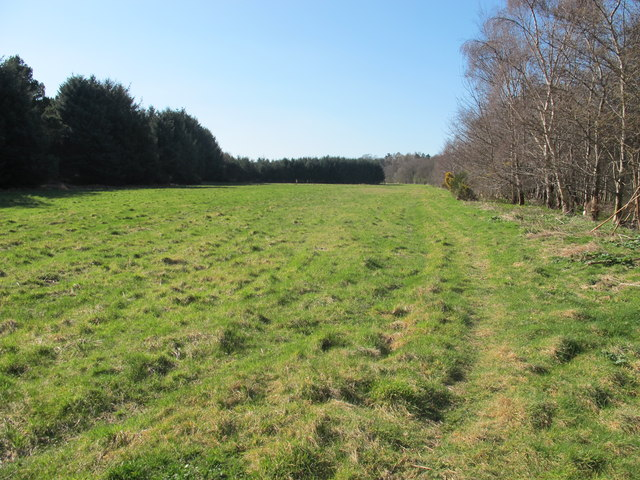 Field and Woods near Red Craig