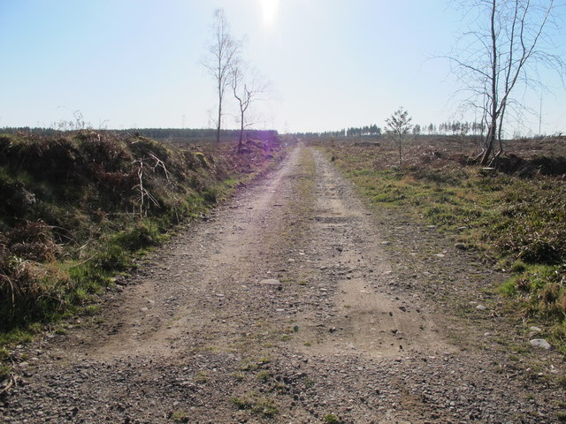 Track in Coston Wood
