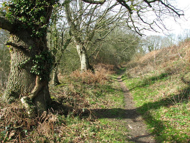 Narrow path along the edge of Strumpshaw Fen