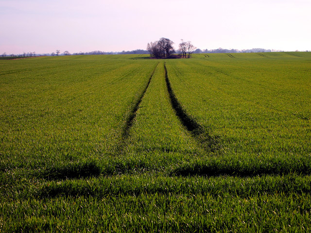 Across the field to Keldy Hill
