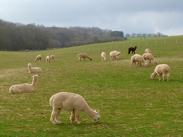 Pasture, Baydon