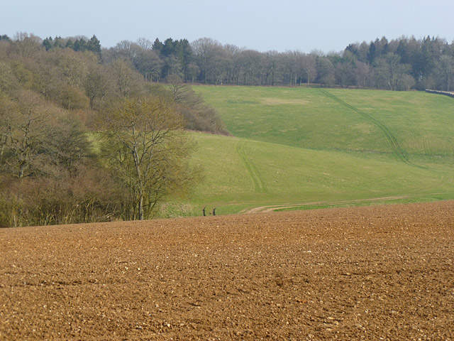 Farmland and woodland, Ramsbury