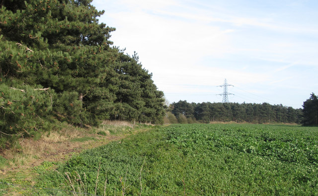 Field boundary with conifer plantation