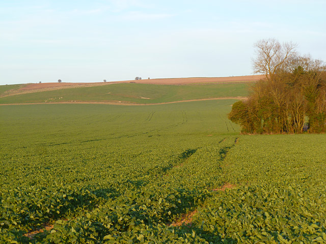 Farmland, Lower Upham, Aldbourne