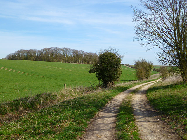 Track and farmland, Lambourn