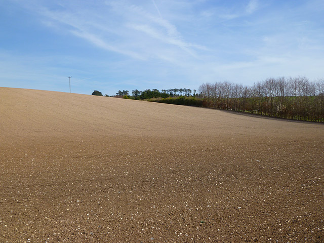 Farmland, Lambourn