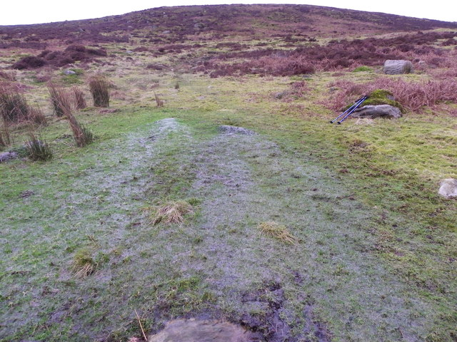 Cold Well Spring - Bloe Greet Breast - Bowland