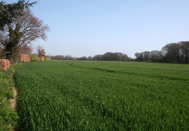 Arable field beside North Shore Road