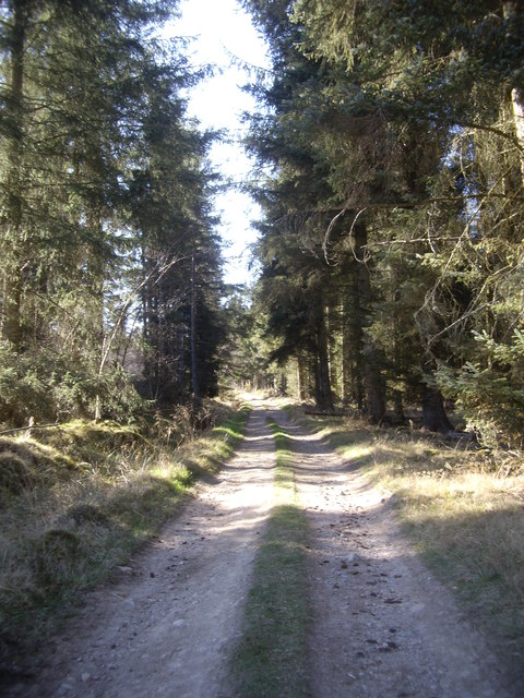 Track through Braeside Wood