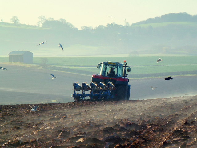 Early morning ploughing 2