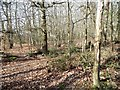 SU8955 : Woodland alongside the Basingstoke Canal by Christine Johnstone