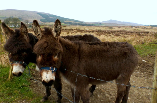 Donkeys on the road to Glenmacannivie