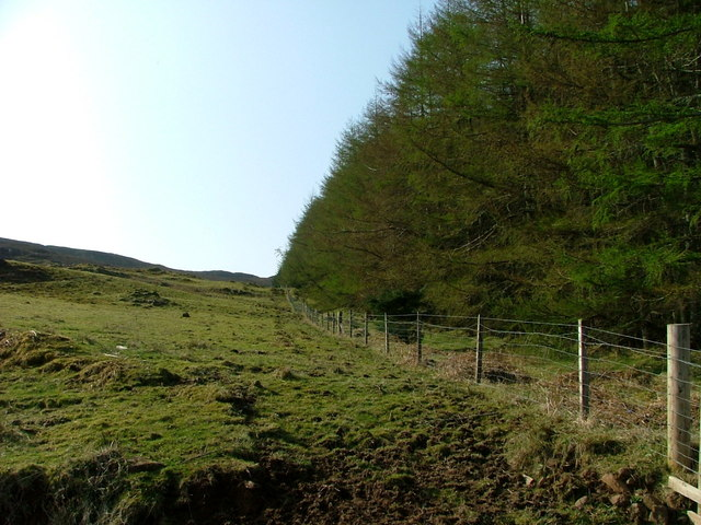 Eastern edge of Kingsburgh Forest