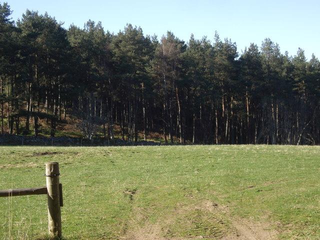 Carlogie Wood