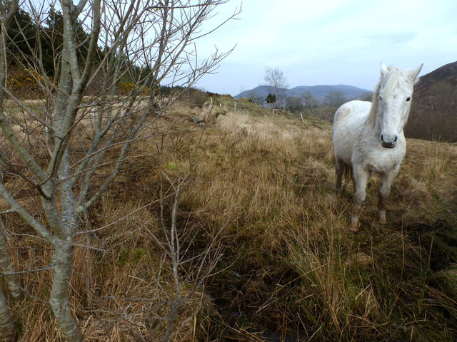 Horse at Glenmacinnive