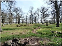 TQ2074 : Richmond Park by East Sheen Gate by Christine Johnstone