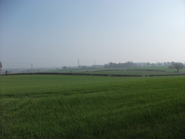 Rolling arable fields with well trimmed hedges