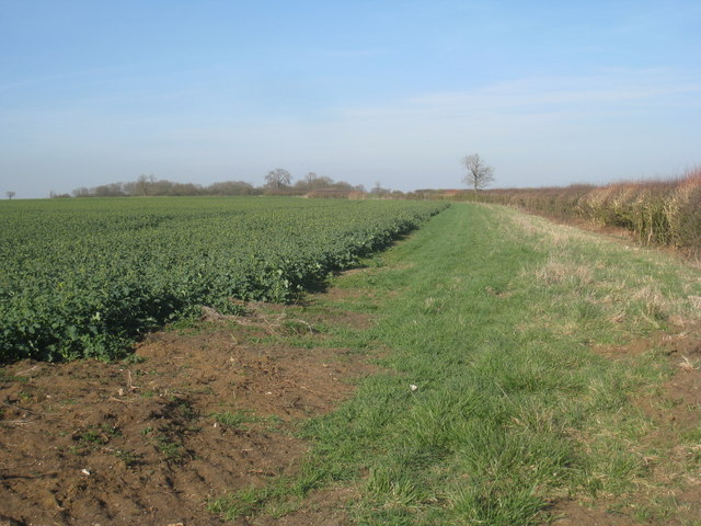 View alongside a hedge