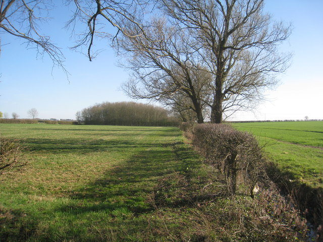 View towards an unnamed wood