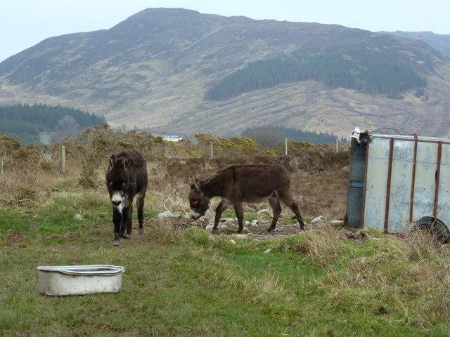 Glenmacinnive donkeys