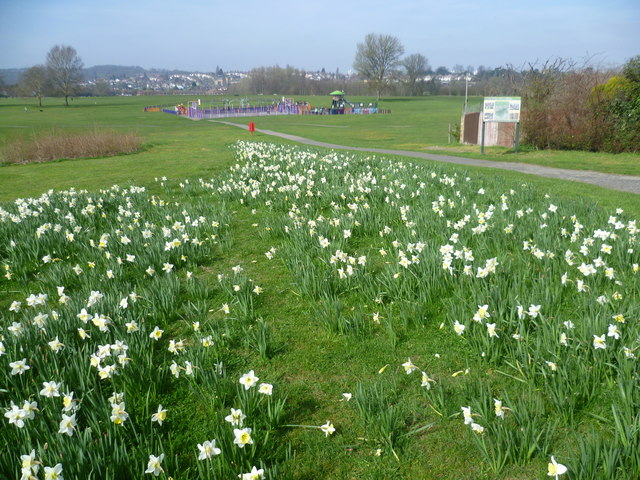 Daffodils in East Wickham Open Space