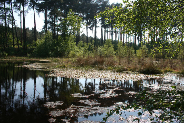 Black Lake, Delamere: general view