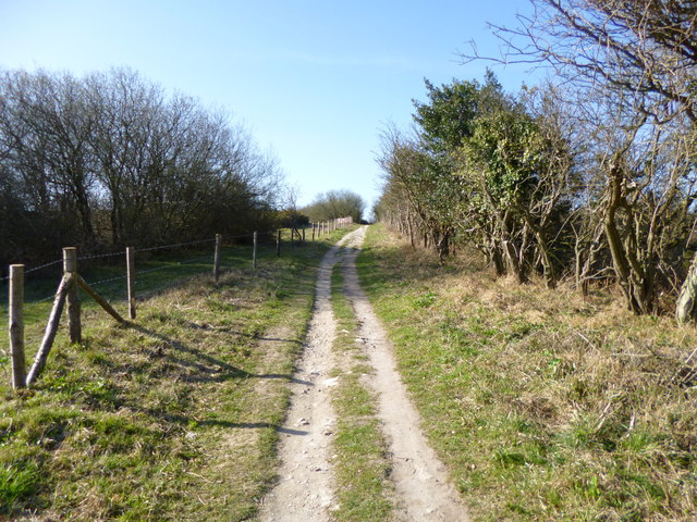 Godlingston Heath, bridleway