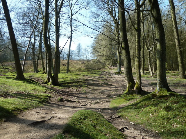 Footpath through Winhill Plantation
