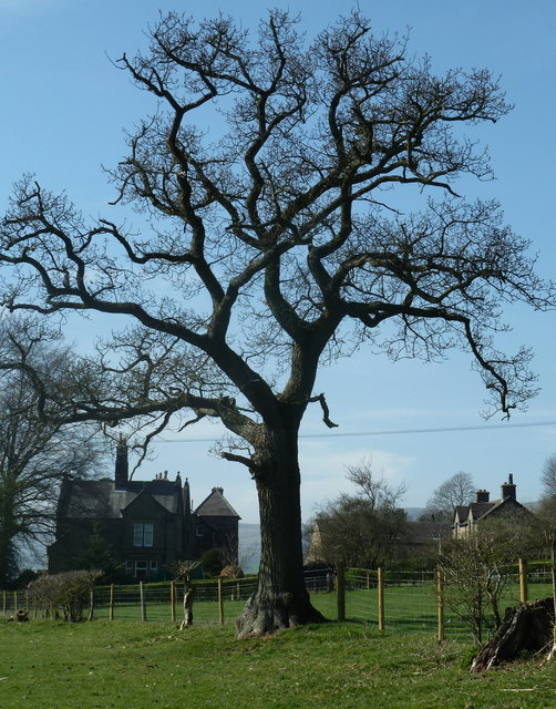 Tree and houses in Aston