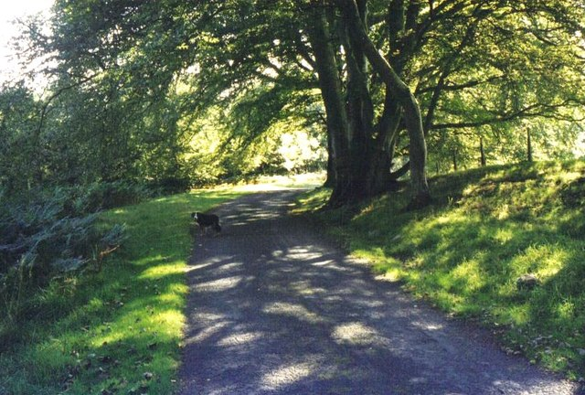 Beech trees on the driveway to Hensol House