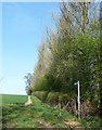 TL0517 : Footpath to Aley Green by Rob Farrow