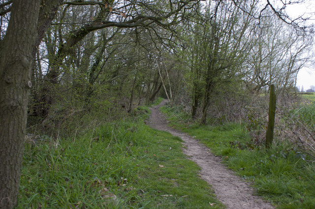 The footpath at the edge of Hitchfield Wood