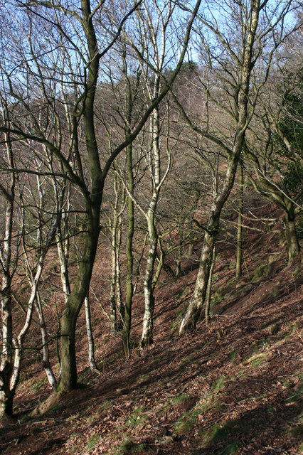 Winter woodland on Raw Head