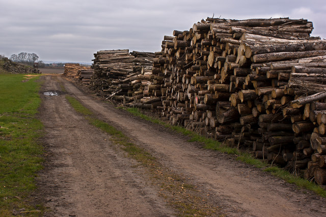 Wood for fuel on the Glazebrook Trail