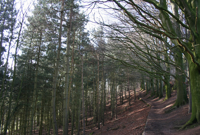 Bodnook Wood
