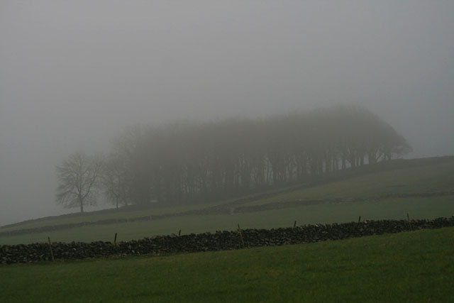 Trees in a morning mist