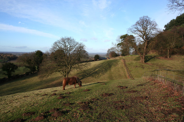 Pony grazing on a winter's afternoon