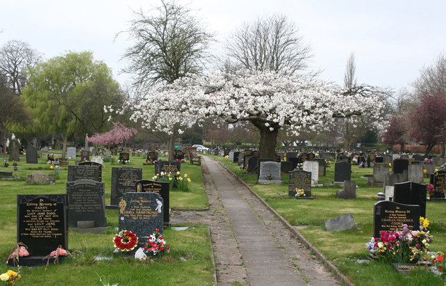 Cherry blossom at Coppenhall Cemetery