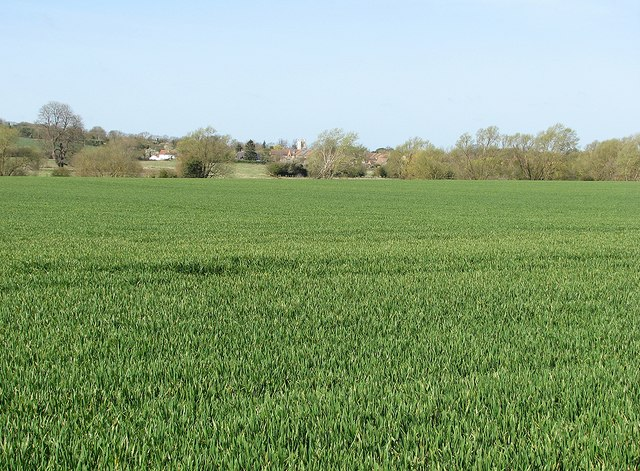 Over fields to Haslingfield on April Fools' Day